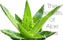 The Benefits of Aloe Vera